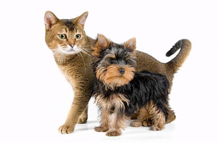 Кастрация кота, кошки