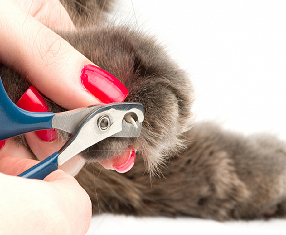 Как подстричь кошке когти?