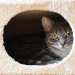 Это изображение имеет пустой атрибут alt; его имя файла - cat_home-150x150-1.jpg