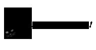 УЗИ (ультрасонография)